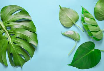 Monstera leaves flat lay arrangement