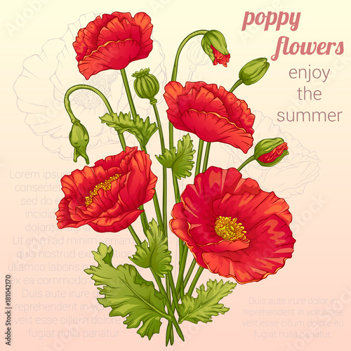 flowers drawing poppy flower vector illustration stock image and