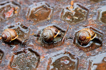 Snails on the drain cover
