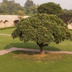 Baum im Mahatma Gandhi Park in Delhi