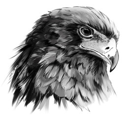 Eagle-buffoon grisaille