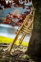 Jazz Trumpet Nature