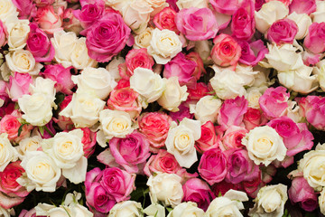 Pattern roses background