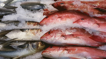 Close-up of a raw fish in market