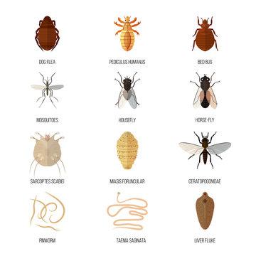 pinworm flukes paraziták evolúciója