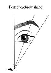 eyebrows scheme vector