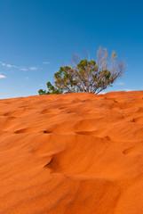 Red sand dune and desert vegetation in central Australia