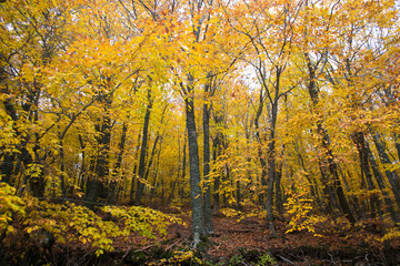 Autumn trees in the forest, Greece