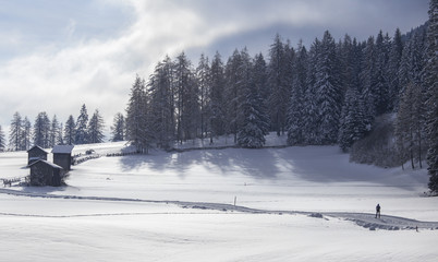 Cross country skiing in the Sesto snowy landscape, Pusteria valley, dolomites, Italy