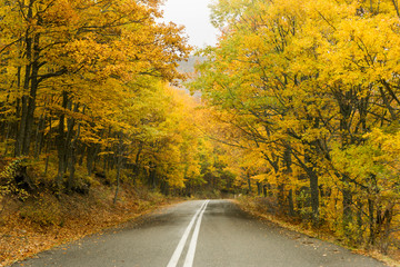 Road in the yellow autumn forest, nature landscape