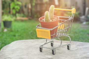 Ecology Concept : Flowerpot with cactus in yellow mini shopping cart or supermarket trolley set on white marble with green natural and sun flare in the background  in vintage style. (Selective focus)