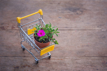 Ecology Concept : Flowerpot in yellow mini shopping cart or supermarket trolley set on wooden floor in vintage style. (Selective focus)