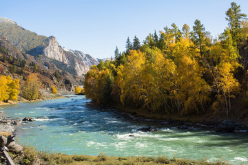 Chuya River and autumn forest, Altai Republic, Russia.
