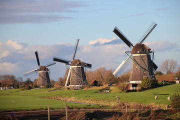 Windmills of the wilsveen water system in the driemanspolder. Stompwijk, Netherlands