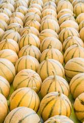 Ripe cantaloupe melons. Food background.