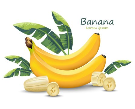 Banana Vector realistic fruit isolated on white Vector