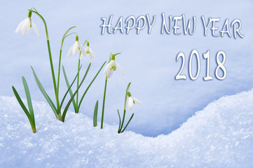New Year 2018 greeting card, group of snowdrops Happy New Year text in English language