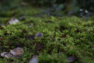 Leafs and moss on the ground in swedish fall