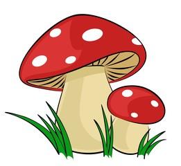 Forest mushrooms.