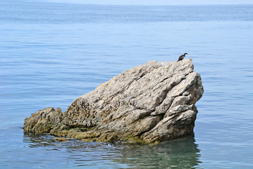Rock in the adriatic sea near Trieste, Italy