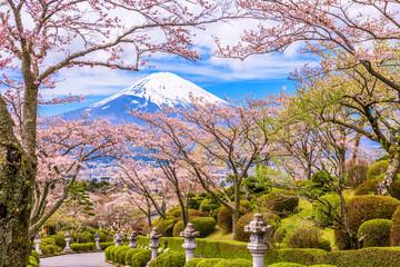 Fuji Mountain in Spring