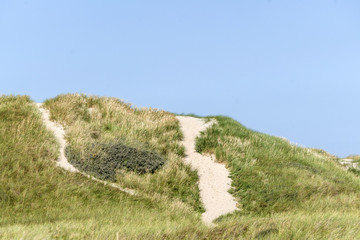 Sand dune in Denmark covered with green lyme