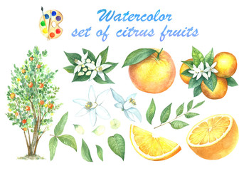 A large set of watercolors oranges.