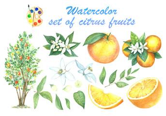 A large set of watercolors oranges.