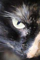 Cute Kitten Face. Looking Cat Eyes Portrait. Macro Closeup.Top View.