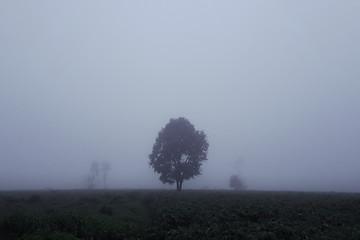 Trees in mist, fog.