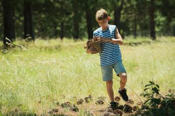 Boy collecting pine cones