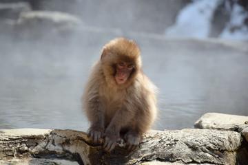 地獄谷野猿苑の子猿