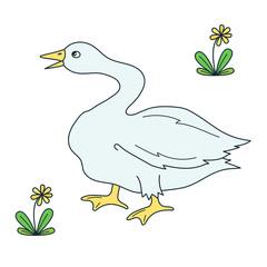 Goose bird vector illustration