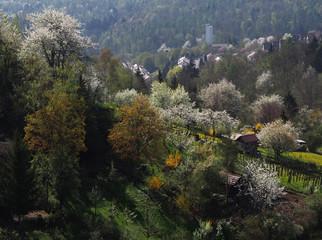 Obstblüte in Stuttgart-Rohracker