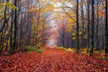 Ormanda dökülmüş sonbahar yaprakları