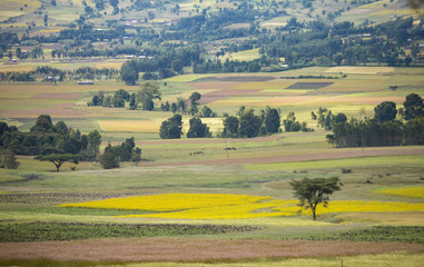colorful fields in the mountains of Ethiopia