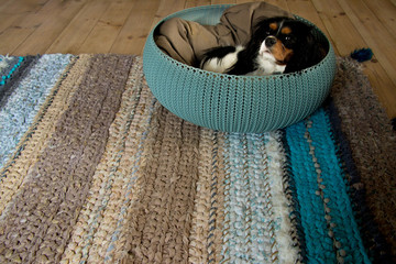 small puppy laying in rattan round rattan basket standing on colorful turquoise handmade woven rug consisting of various textures lying on a light wooden floor