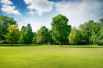 Picturesque green glade in city park. Green grass and trees. Wall mural