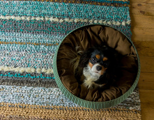 small puppy laying in rattan round rattan basket standing on colorful turquoise handmade woven rug consisting of various textures