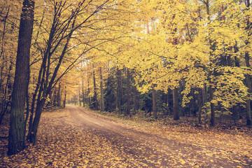 Fototapeta jesień obraz