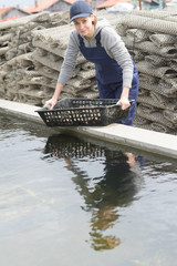 female oyster farm worker harvesting the product