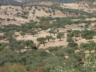 Cumbres de Enmedio, pueblo rural de Huelva (Andalucia,España)