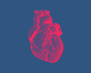 Pink wireframe human heart on blue BG
