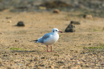 Gull standing on the shore at low tide