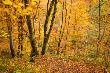 Scenic landscape of forest in fall