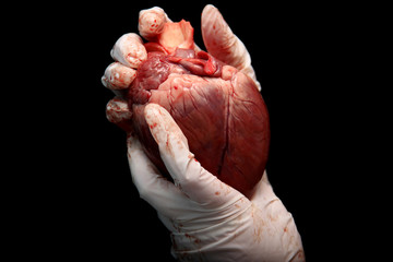 abstract illegal organ transplantation. A human heart in the hand of a surgeon woman. International crime. Assassins in white coats. Death and money. Heart transplant isolated on black background