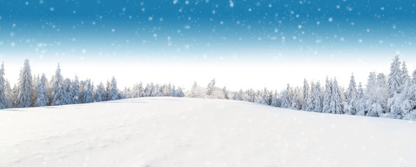 Winter panoramic landscape with forest on background