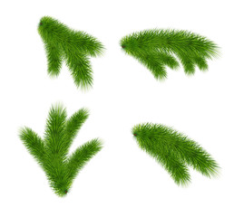 Set of fir branches on white background