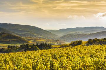 Papiers peints Miel Bourgognes, vignes et paysage