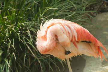 pink flamingo in zoo landscape .